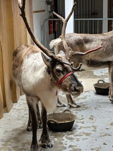 Reindeer Cocktail Party